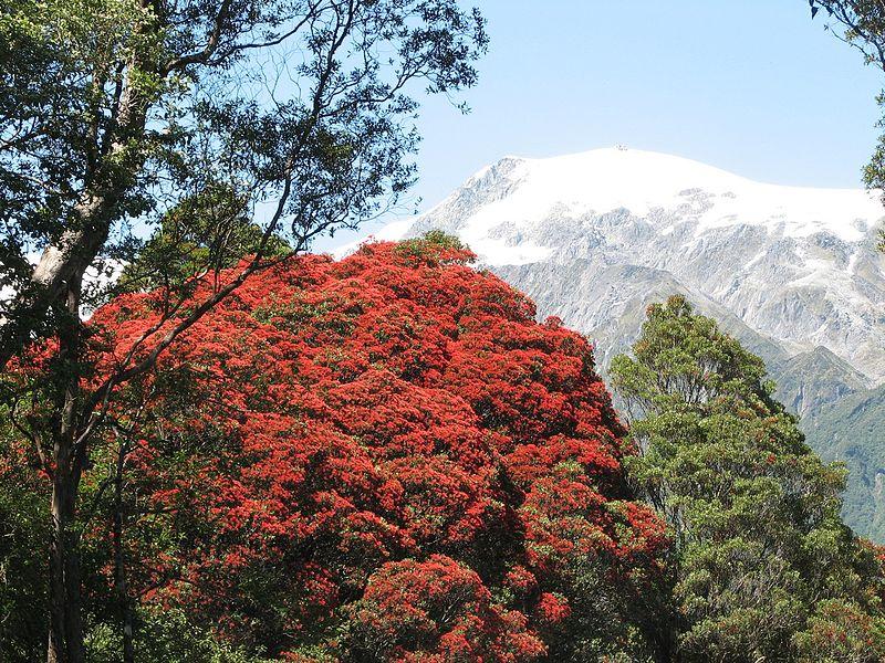 Rata Forest, Nuova Zelanda
