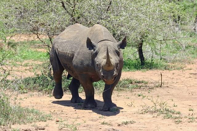 rinoceronte zoo 2