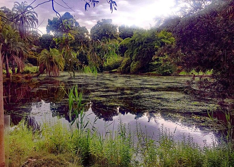 08 royal botanic gardens melbourne
