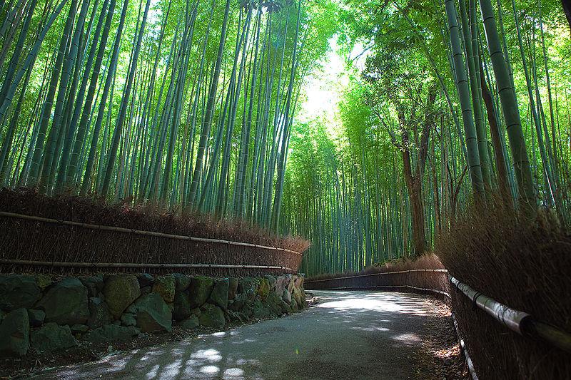 Foresta di bambù di Arashimaya Sagano, Giappone