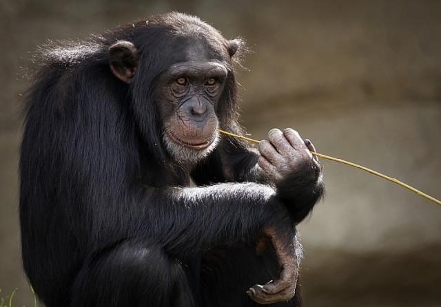 monkey 2790452_960_720