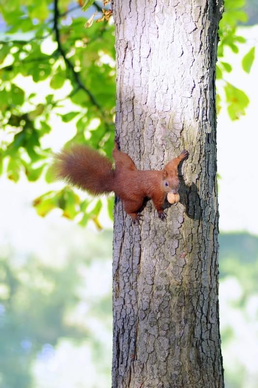 scoiattolo parco varsavia