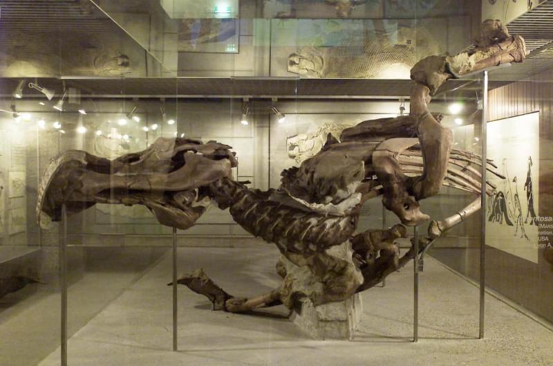 10 - Senckenberg - Museo di Storia Naturale
