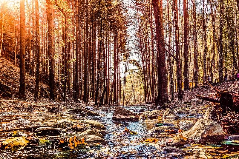 Bosco del Parco delle Foreste Casentinesi