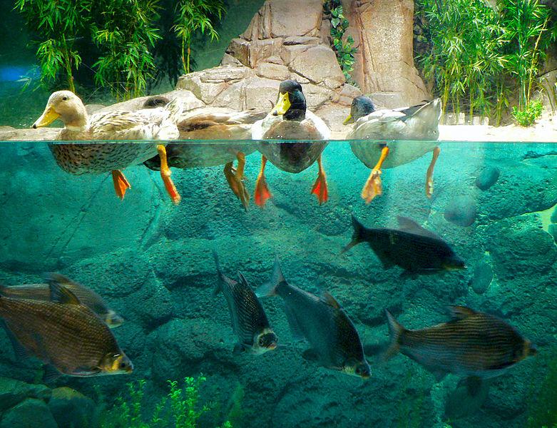 13 shanghai ocean aquarium