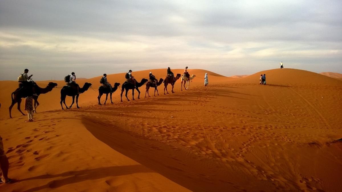sharm el sheikh egitto cammelli carovana