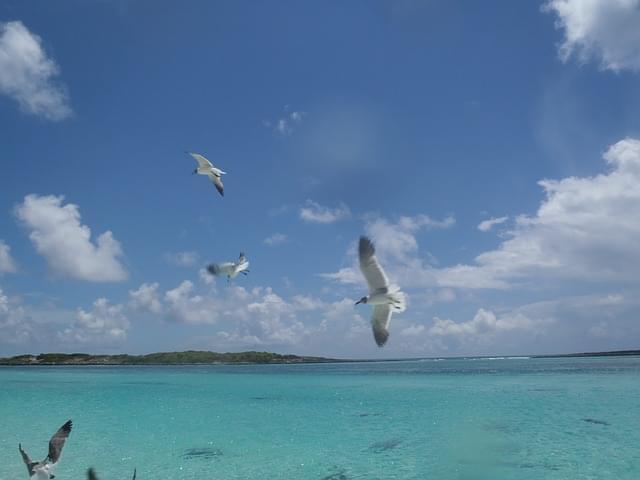 spiagge grand bahama