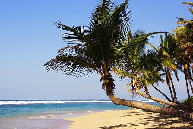 spiaggia santo domingo con palme