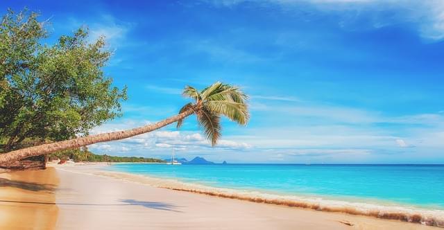 spiaggia caraibi mare palme
