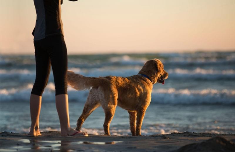 Spiaggia per i cani