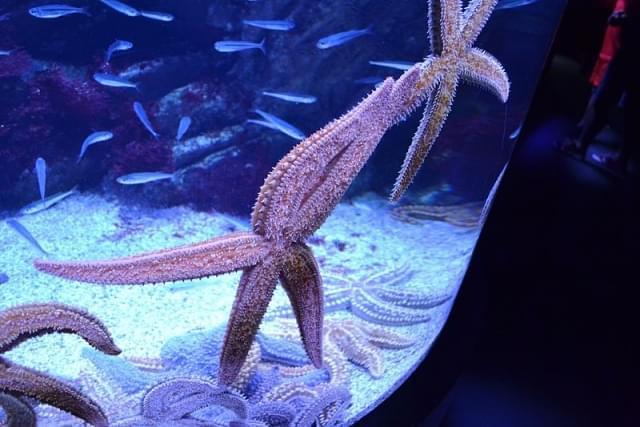 stella marina san sebastian aquarium