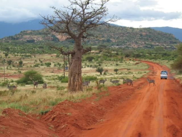 strada safari tsavo