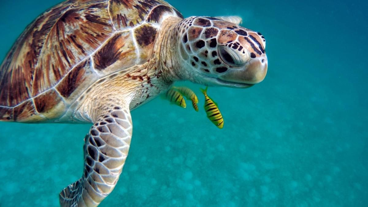 tartarughe marine kenya