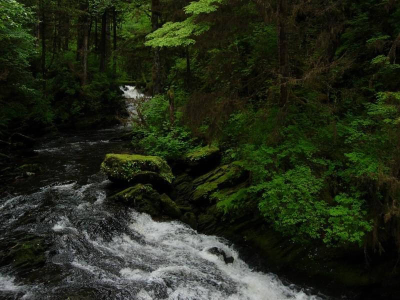 Foresta Nazionale Tongass