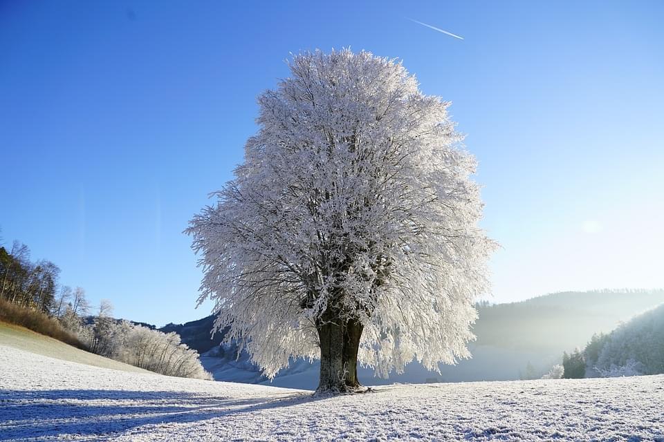 tree 1959267_960_720