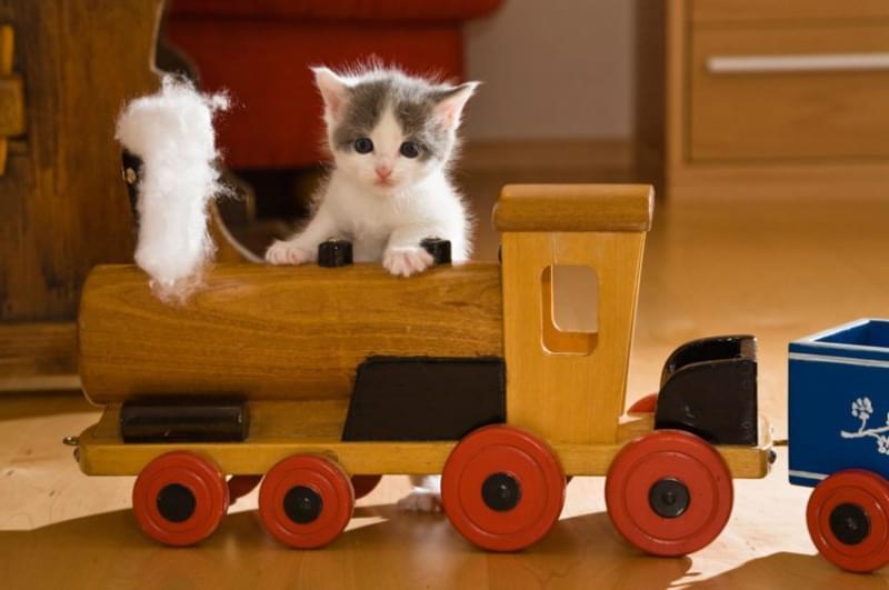 Trasporto in treno