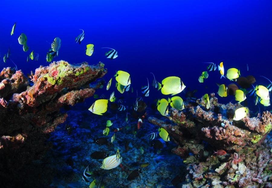 barriera corallina(1)