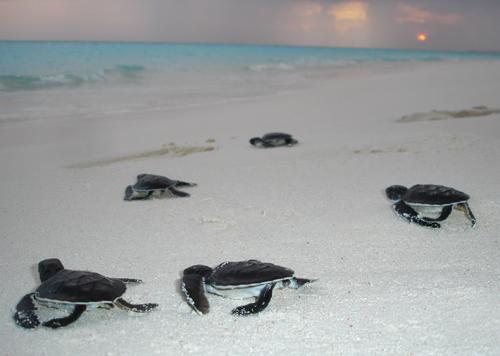 atollo di nanuu maldive