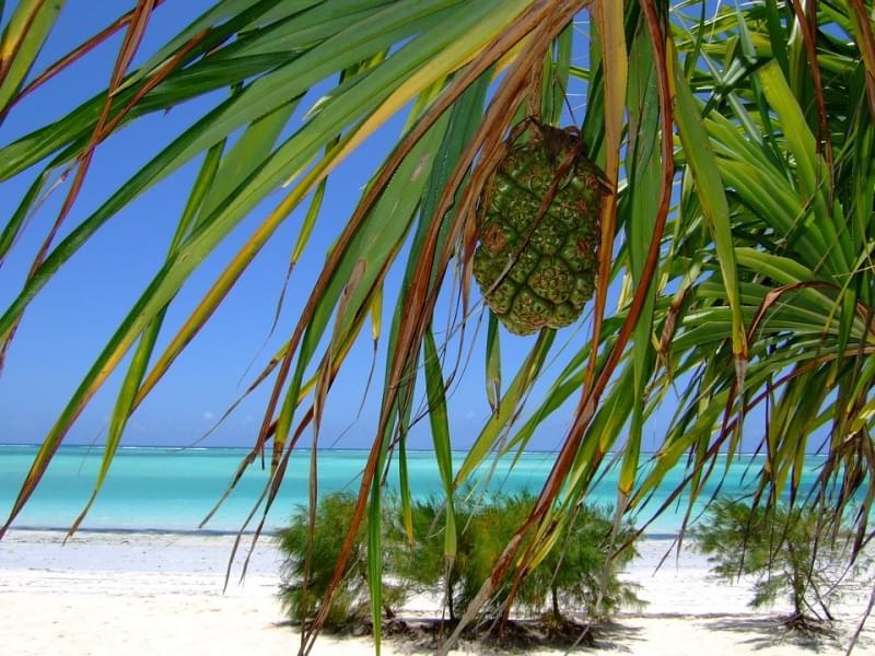spiagge dello Zanzibar ad Agosto