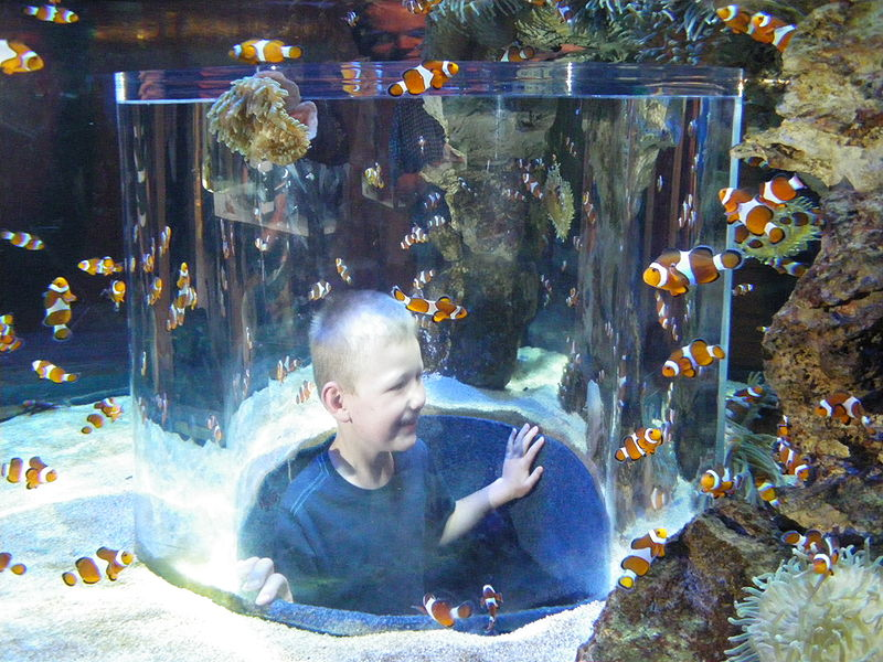 01 two oceans aquarium
