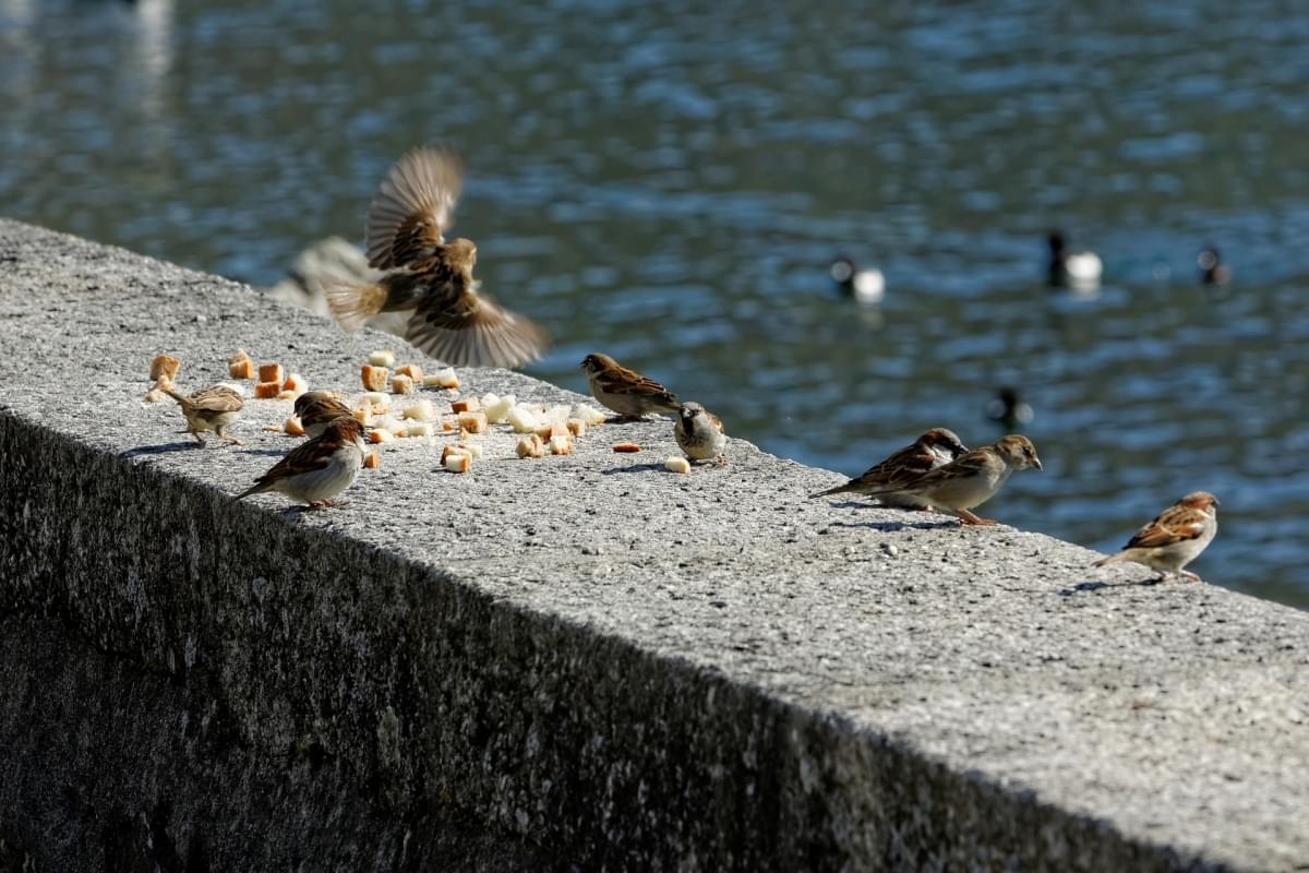 uccelli a ginevra