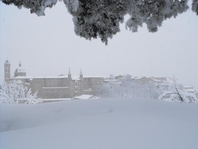 4 - Urbino, 80 cm