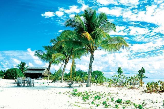 Vegetazione alle Maldive