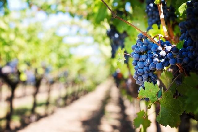 viaggio strade del vino
