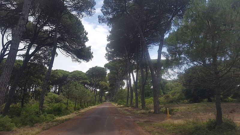 Bosco nel Parco Naturale di Migliarino