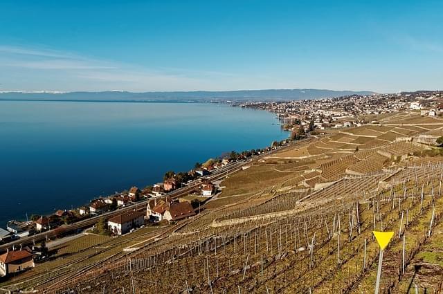 vigne lavaux svizzera ginevra