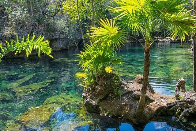 nella natura dello yucatan