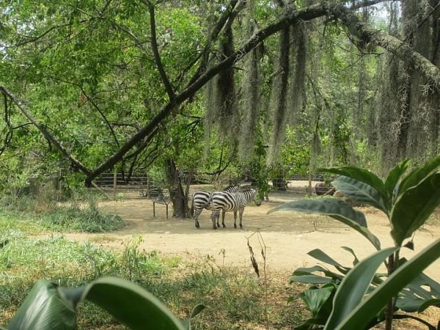 zoo cali