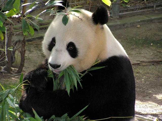 zoo di pechino